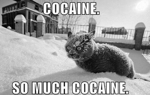 Cocaine. So much cocaine.