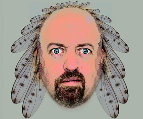 bill bailey lyrics