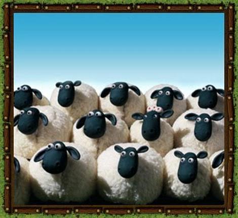 img_flock