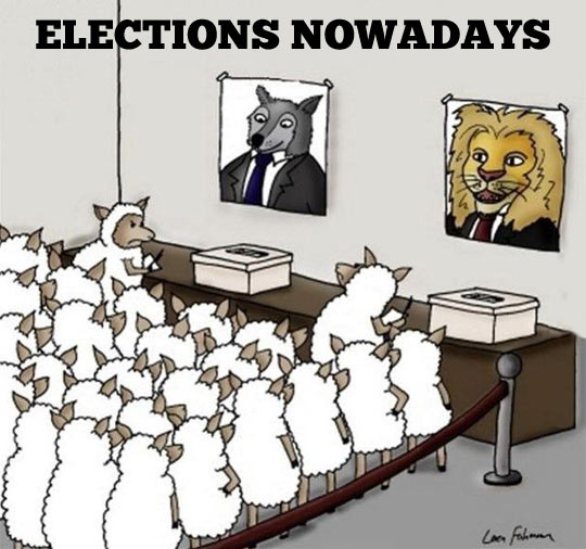 funny-elections-animals-sheep-fox-lion1