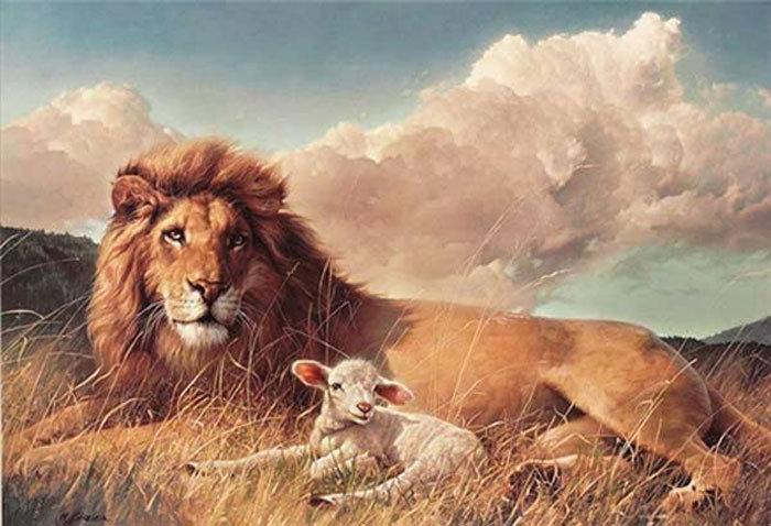 Lion_Lamb