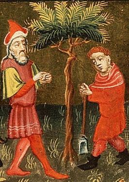barren_fig_tree