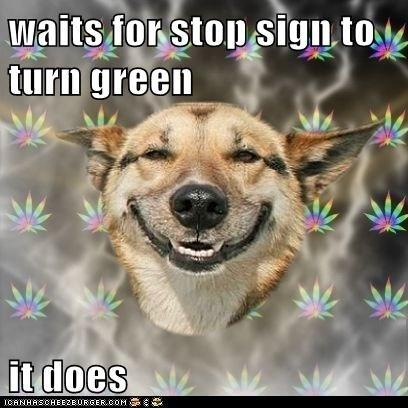 stoner+dog_5b38c5_3077427