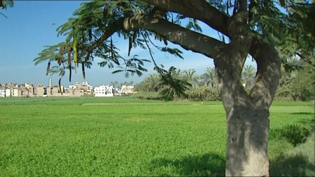 minaret-islam-field-agriculture